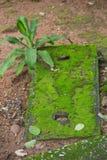 生长在砖基础的绿色青苔 库存图片