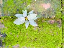 生长在砖的一点植物和青苔 免版税库存照片