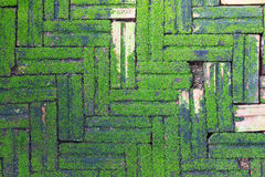 生长在砖的青苔 免版税图库摄影
