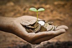 生长在硬币的树 库存图片