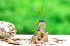 生长在硬币金钱和在绿色背景、投资和企业概念的玻璃瓶的树 免版税库存图片