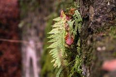 生长在秋天的一个岩石的蕨 免版税库存照片