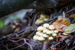 生长在秋天的狂放的森林蘑菇 库存图片
