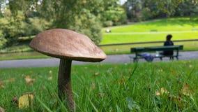 生长在秋天的蘑菇 免版税库存照片