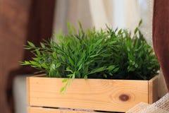 生长在箱子的绿草 免版税图库摄影