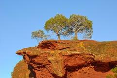 生长在红色岩石顶部的三棵杉树 免版税库存图片