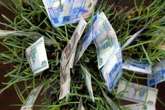 生长在绿草的俄罗斯卢布票据 货币成长 财务的概念 免版税图库摄影
