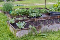 生长在耕种的花和植物箱子 免版税库存图片