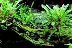 生长在腐烂的树干的绿色植物 免版税库存图片