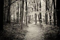 生长在英国森林地地板上的会开蓝色钟形花的草 免版税库存照片