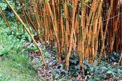 生长在草和常春藤中的竹棍子 库存照片