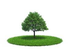生长在草甸的树 向量例证