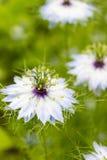 生长在草甸的美丽的五颜六色的野花在晴朗的夏日 免版税库存照片