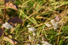 生长在草甸的观点的野花 免版税库存图片