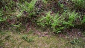 生长在草甸边的蕨 库存图片
