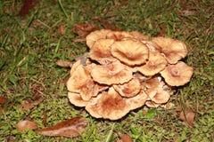 生长在草的丛的蘑菇 免版税库存图片