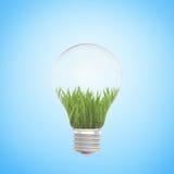 生长在蓝色背景的一个电灯泡的绿草 免版税库存图片
