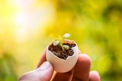 生长在蛋壳的年幼植物对负手中 免版税库存图片