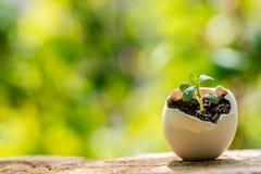 生长在蛋壳里面的年幼植物 免版税库存图片