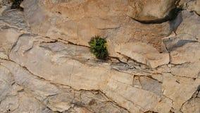 生长在裂缝的绿色植物 图库摄影