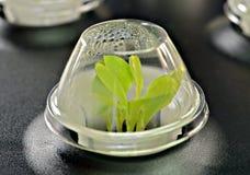 生长在起始者玻璃容器的种子 库存照片