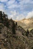 生长在金牛座山倾斜的杉树  图库摄影