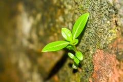 生长在阳光下的年幼植物 免版税库存照片
