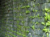 生长在隧道墙壁上的青苔 免版税图库摄影