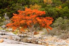 生长在青山前面的岩石地形的精采橙红树 库存图片