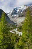 生长在高山谷上的落叶松属树 免版税库存照片