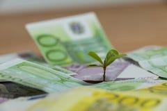 生长在货币笔记的小植物 免版税库存图片