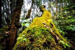 生长在死的树的植物 库存图片