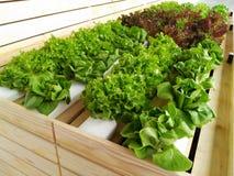 生长在水耕的系统的耕种新鲜蔬菜 免版税图库摄影