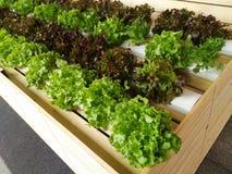 生长在水耕的系统的耕种新鲜蔬菜 免版税库存照片