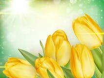 生长在绿色bokeh的郁金香 10 eps 图库摄影