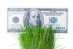 生长在绿草的美金 免版税库存图片