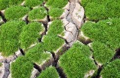 生长在破裂的地面的绿色小植物 免版税库存图片