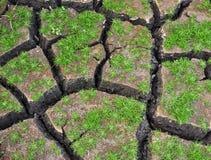 生长在破裂的地面的绿色小植物 免版税库存照片