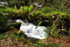 生长在falled日志的蕨,用后边移动的水 免版税库存图片