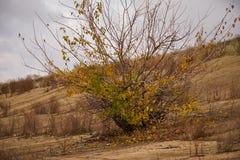 生长在imposi的偏僻的树 免版税库存照片