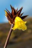 生长在La Gran Sabana,委内瑞拉的兰花 免版税图库摄影