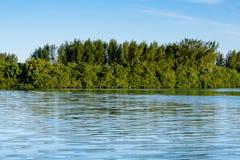 生长在Marapendi盐水湖边缘的美洲红树树和其他植被,在巴拉岛da Tijuca,里约热内卢 免版税库存图片
