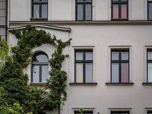 生长在XIX廉价公寓的常春藤 免版税库存照片