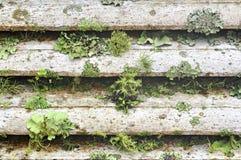 生长地衣墙壁空白木 免版税库存照片