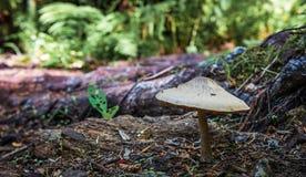 生长大秋天的蘑菇高 图库摄影
