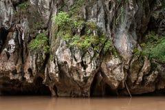 生长岩石峭壁的植物 库存照片