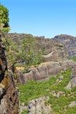 生长岩石结构树 免版税库存图片