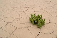 生长干燥破裂的地球上的绿色植物 免版税库存图片