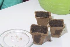 生长幼木在家 在桌上是泥煤罐充满地球和充满水 附近有种子的一个茶碟 库存图片