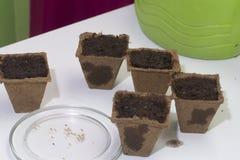 生长幼木在家 在桌上是泥煤罐充满地球和充满水 附近有种子的一个茶碟 免版税图库摄影